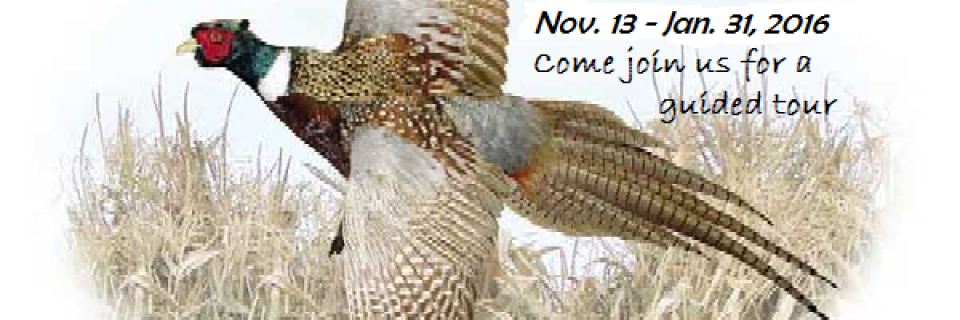 Pheasant Hunt November 14th until January 31, 2016